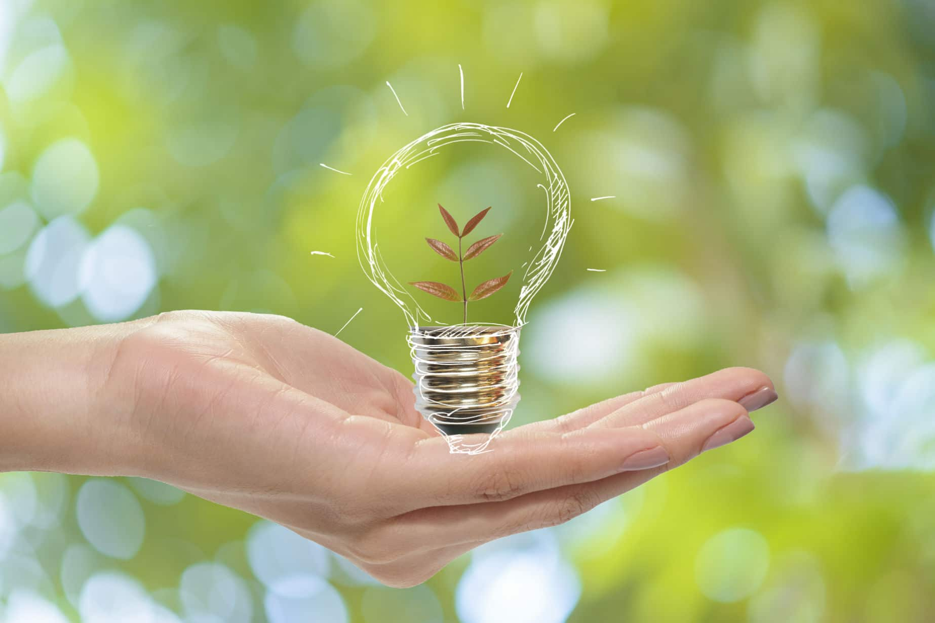 Going Green in 2019, Tips for Greener Living